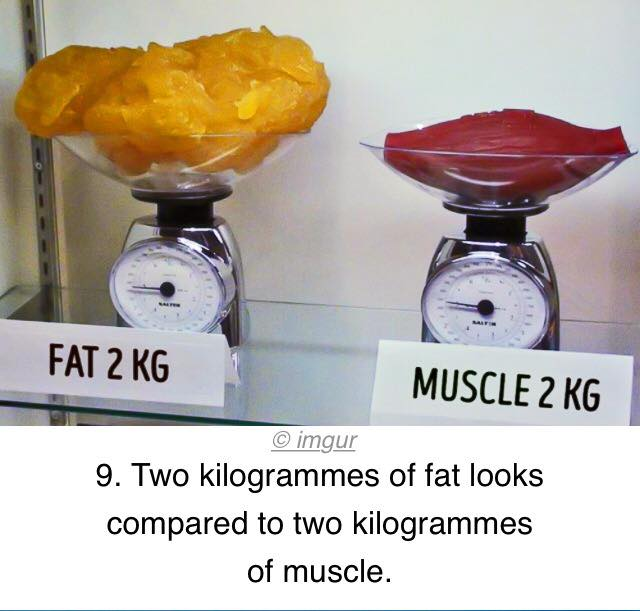 Fat weighs more than muscle? Definitely not! Actually, a pound is a pound regardless of what you are measuring, they just look different in size/volume. Forever Fit, Duncan, BC