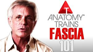 Thomas Meyers is a leading researcher on how fascia. Forever Fit, Duncan, BC